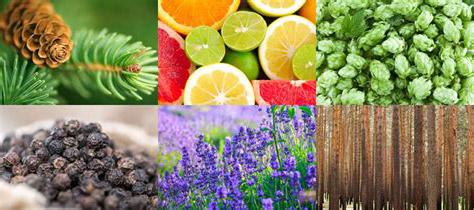 arôme des terpenes